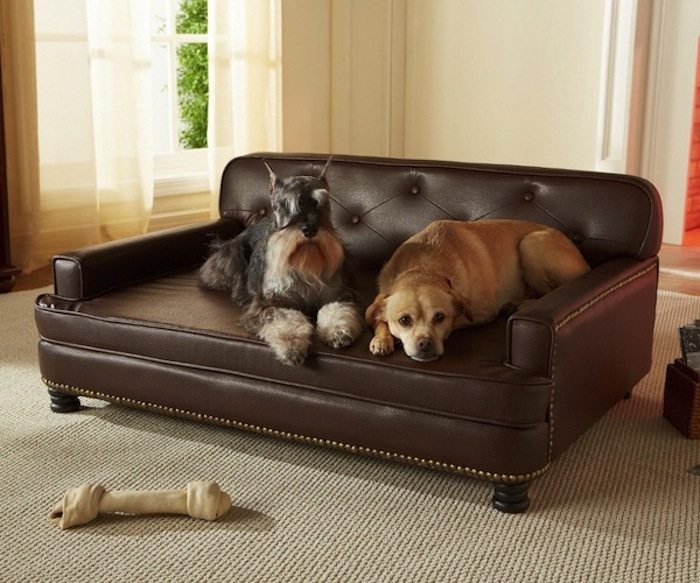 Enchanted-Home-Pet-Library-Sofa-Pet-Bed