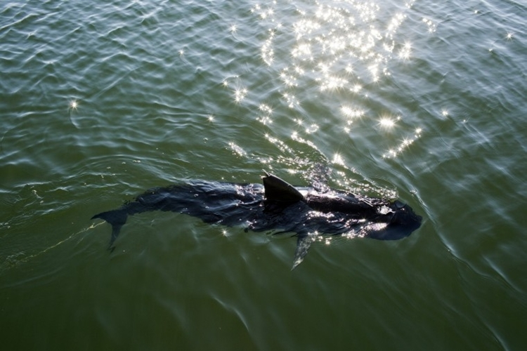 US Navy Underwater Spy Drone
