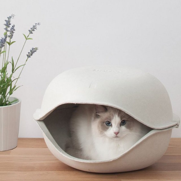 the Cat Shell from Oppo