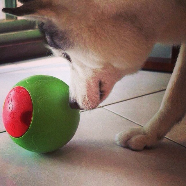 Foobler Puzzle Feeder for Dogs