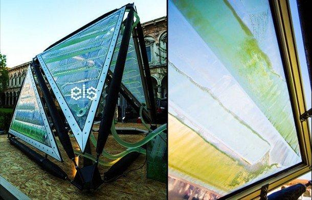 Algae-Canopy3-610×392