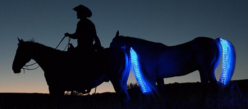 Horse tail lights (2)