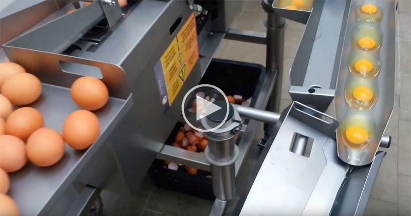 industrial-egg-separator-video