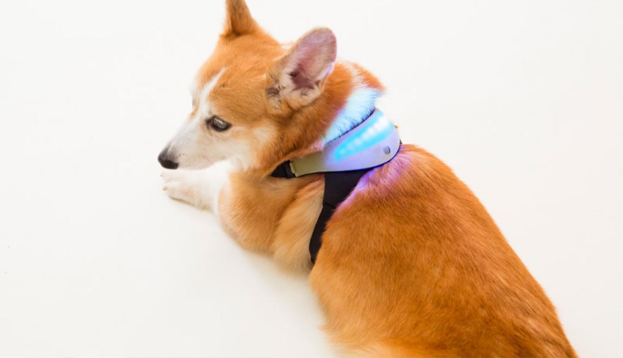 dogcolor