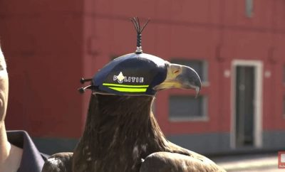 Dutch Police Employed Trained Eagles to Take Down Illegal Drones